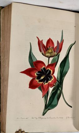 Edwards's Botanical Register: Or, Ornamental Flower-Garden And Shrubbery: Consisting Of Coloured Figures Of Plants And Shrubs Cultivated in British Gardens; Accompanied By Their History, Best Method of Treatment in Cultivation, Propagation, &c; Edited by John Lindley. Vols. 1-10