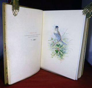 Nos Oiseaux; Illustrated by Hector Giacomelli